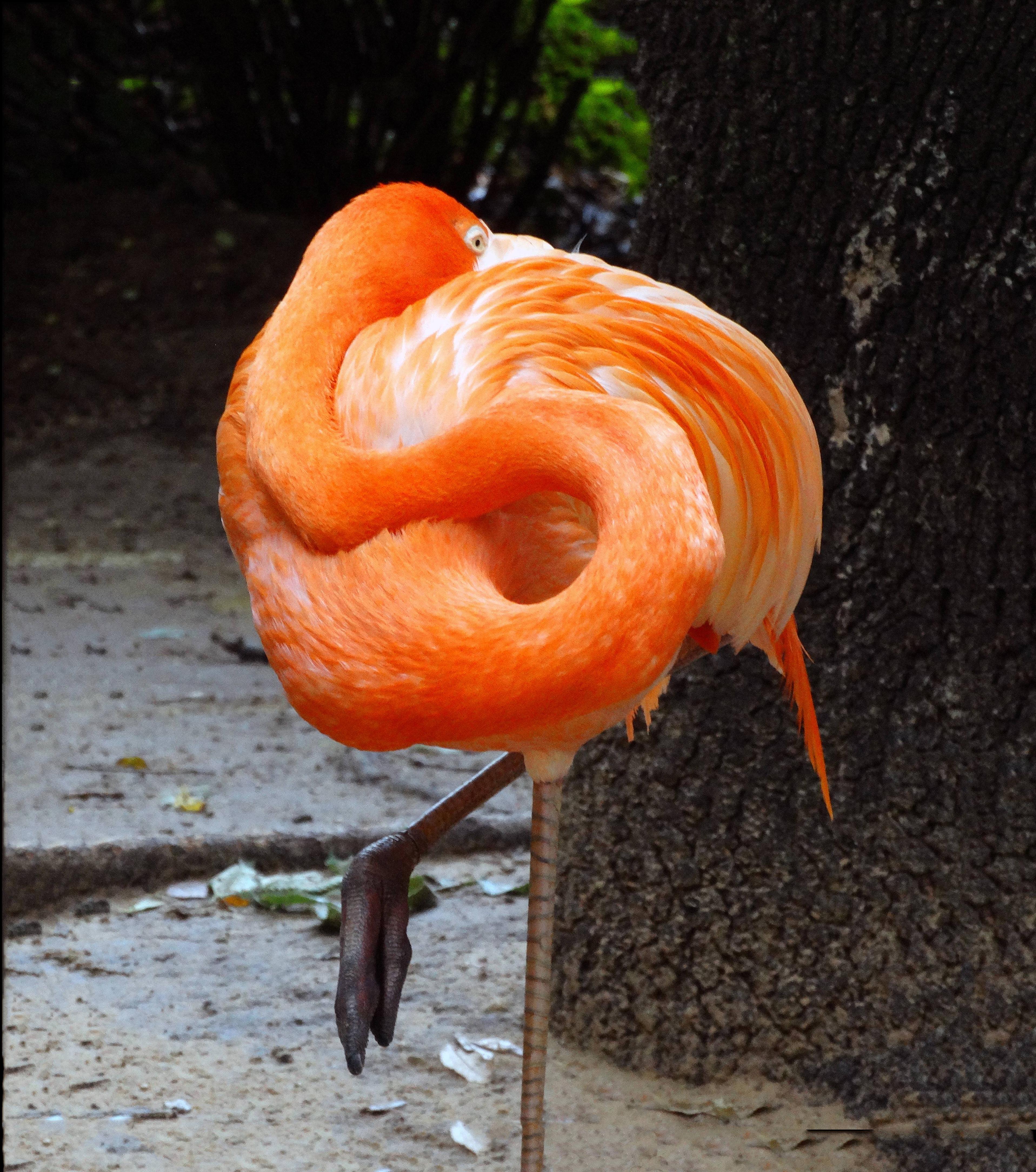 Divine Inspiration Photo #10A - Flamingo - 8 x 10
