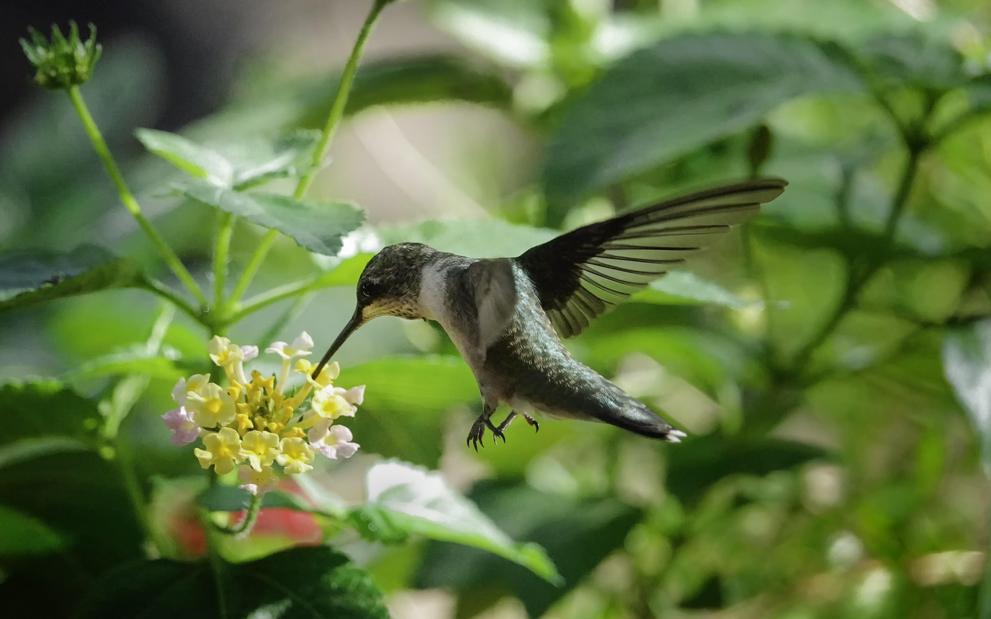 Divine Inspiration Photo #22B - Ruby-Throated Hummingbird #2 - 5 x 7